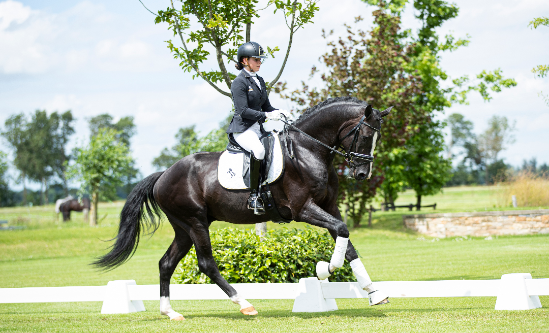 Black Horse Auctions Releases First Part Of Their Dressage Collection News Horse